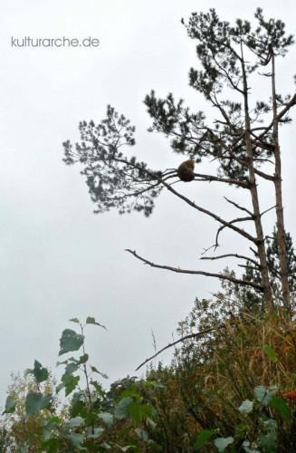 Sommerrodelbahn und Affenwald Malchow